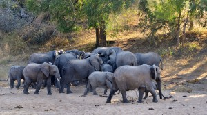 Elephants At Rhino Post Water Hole