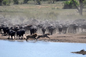 Action At The Waterhole