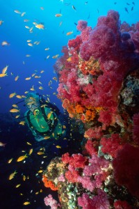 Colourful Reef Scuba Diving