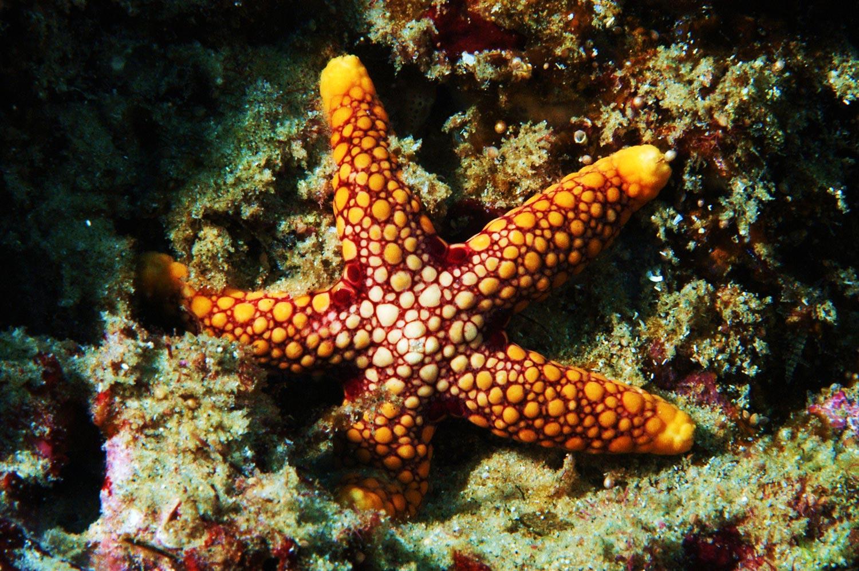 Starfish by Donna Scherer Fisheyeafrica