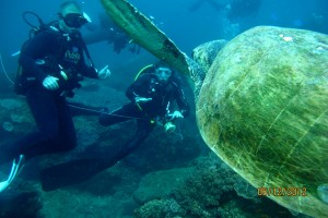 Luxury Dive Resorts - Diving At Thonga