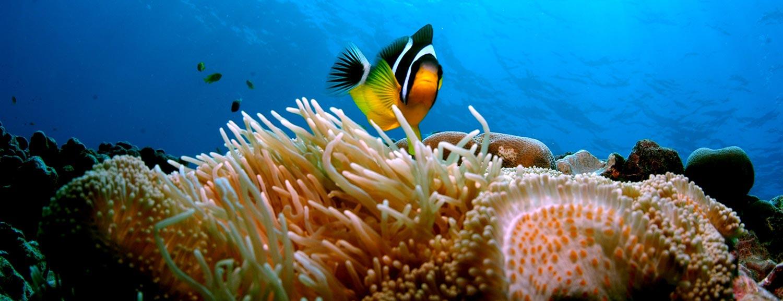 Reef At Thonga