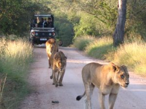 south Africa safari lodges