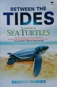 In search of sea turtles
