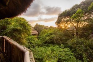 Thonga Beach Lodge Forest View Rooms - Kim Steinberg (excellent for presentations)