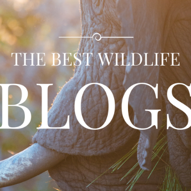 Best Wildlife Blogs