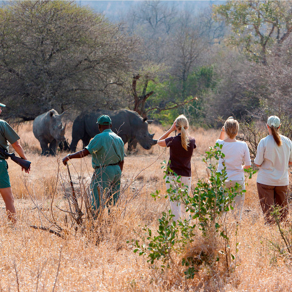 Daily Walking Safaris In Big 5 Territory - available at Plains Camp only