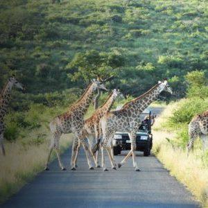 safari-drives