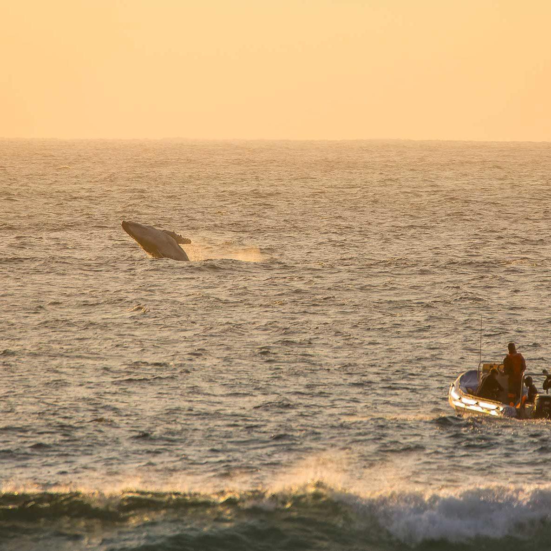 Open Ocean Experience